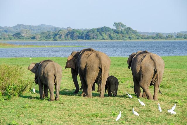 zadky slonů